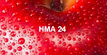 HMA 24